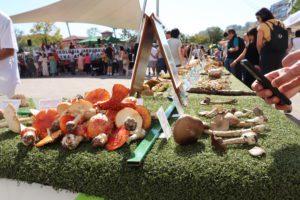 Exposición de micología del Club Deportivo Loiolatarra