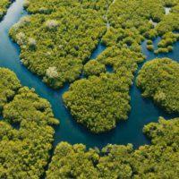 Las soluciones de la naturaleza centran el debate en la PreCOP