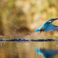 Las aves, con el 40% de especies en peligro, afrontan su Día Mundial