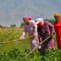 Mujeres rurales, creadoras de resiliencia climática