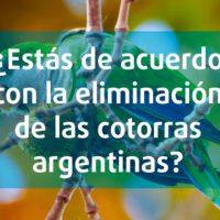 ¿Estás de acuerdo con la eliminación de las cotorras argentinas, una especie invasora?