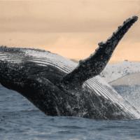 La biodiversidad de los océanos podría recuperarse en 30 años