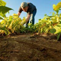 El suelo, la mejor herramienta para capturar CO2