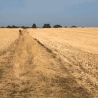 Una hoja de ruta para convertir el suelo en sumidero de carbono