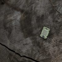 Los árboles de Panamá se actualizan con chips para evitar la tala ilegal