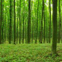 Los nuevos bosques crecen más rápido y vulnerables al clima