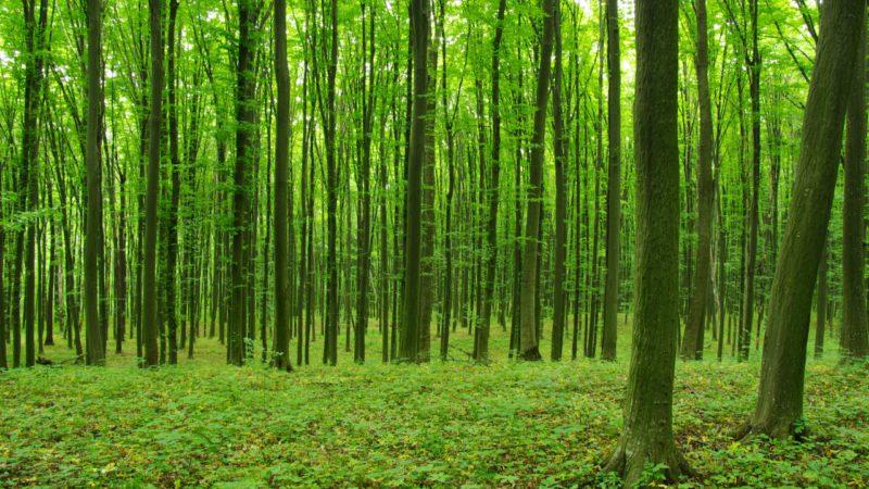 Día Internacional de los Bosques: cuidar el planeta con gestión forestal