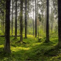 La plantación masiva de árboles podría no ayudar contra la crisis climática