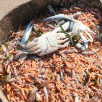 Ribera culpa a las malas prácticas agrícolas de la situación del Mar Menor