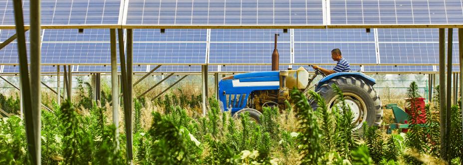 Agrivoltaica: ¿son compatibles la fotovoltaica y el desarrollo agrícola?