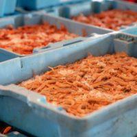 Alimentos sostenibles para consumidores responsables