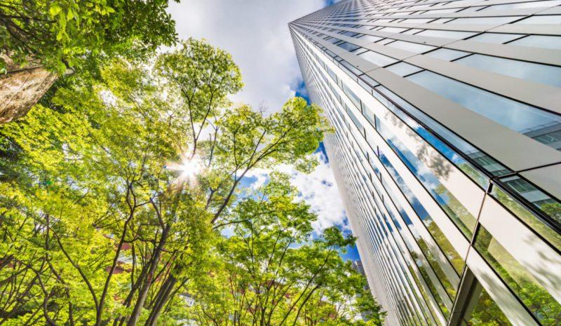Del ladrillo al árbol: hacia una reconstrucción verde