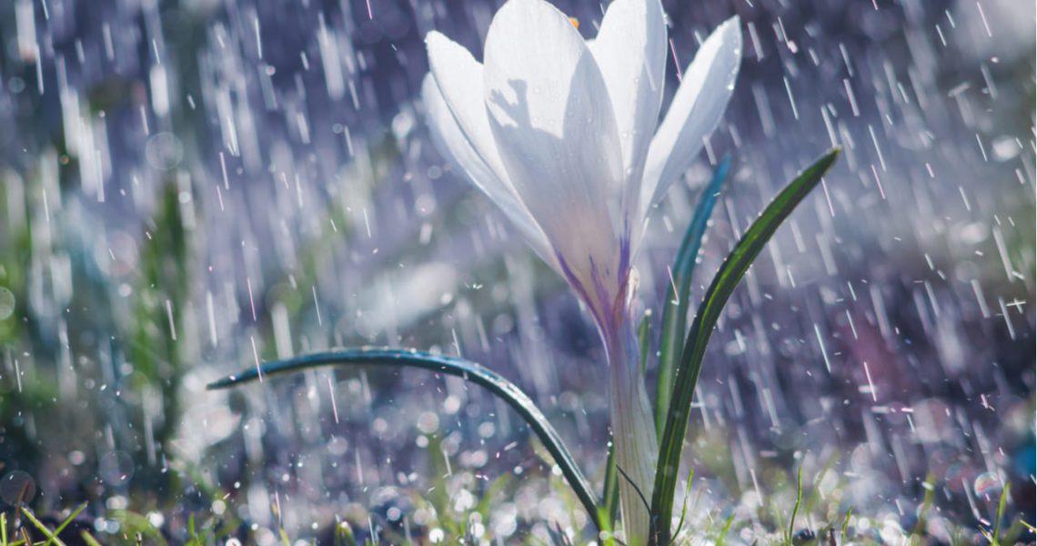 Resultado de imagen de lluvia y crecimiento de las plantas