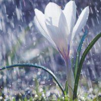 """Descubren que algunas plantas """"sienten pánico"""" a la lluvia"""