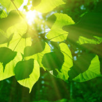 Una hoja que crea combustible a partir de dióxido de carbono