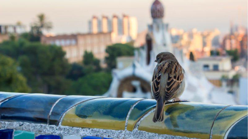 Confirman que el cambio climático altera los hábitos de las aves