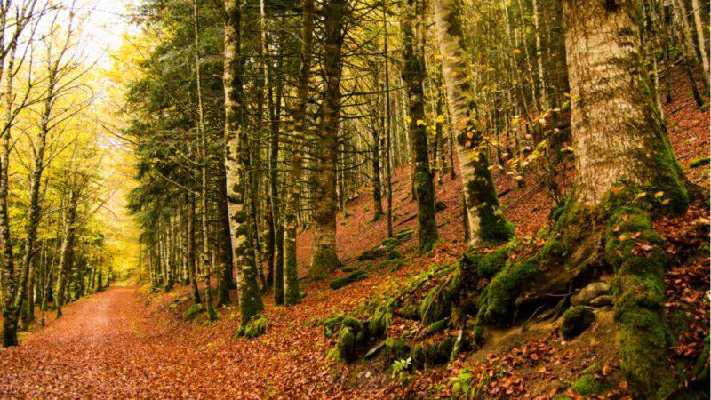 Siete lugares para disfrutar el otoño en España