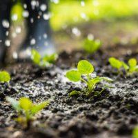 Extremadura avanzará en regadío sostenible para que florezca su economía