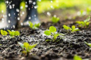 agua riego agricultura firma de foto Jurga Jot