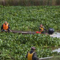 El Ejército acude a retirar toneladas de camalote del cauce del Guadiana