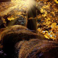Octubre de extremos: un mes muy cálido y seco