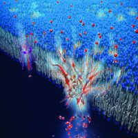 El cuerpo humano inspira un sistema de filtración de agua salada