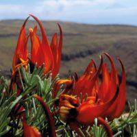 Estas son las especies nuevas de plantas descritas en 2019 por los botánicos españoles