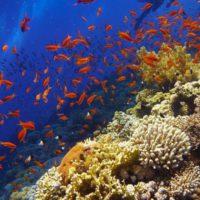 Salvar la Gran Barrera de Coral con probióticos