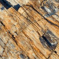 El bosque fósil más antiguo del mundo está en Nueva York