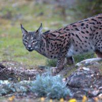 Vida salvaje más allá de la COP25: no olvidemos la biodiversidad