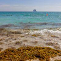 """Las """"zonas muertas"""" de los océanos suponen una amenaza mayor de lo que se pensaba"""