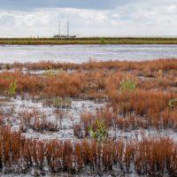 Infraestructuras verdes: la clave para adaptarse el cambio climático