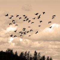 Las migraciones de las aves se adelantan con el cambio climático