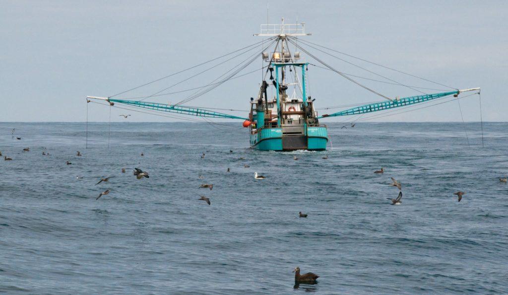 Los barcos de pesca suelen atraer a las aves, sobre todo a los albatros. / Samiamx