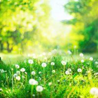 A las primaveras más largas y verdes le seguirán veranos más secos y calurosos