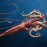 Descubren la secuencia completa del genoma del calamar gigante