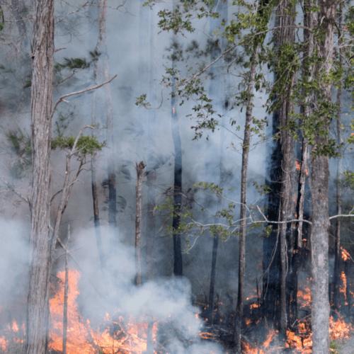 Australia En Llamas Una Catástrofe Para La Salud La