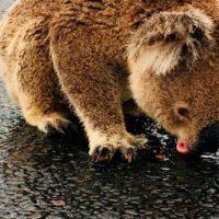 Las lluvias en Australia dan tregua a las zonas más devastadas