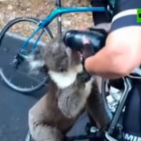 Ciclistas dan de beber a un koala