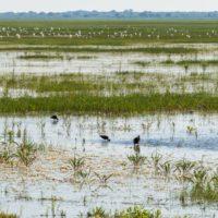 Doñana a examen: la Unesco investiga su estado de conservación