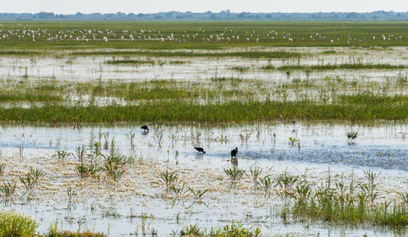 La eutrofización amenaza a los ecosistemas de Doñana