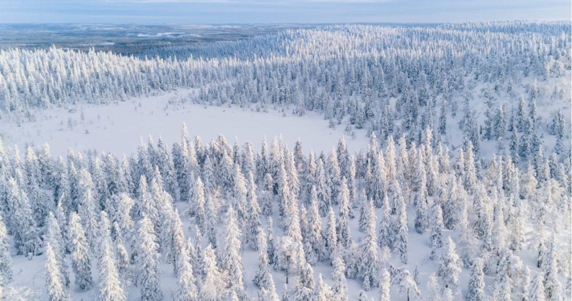 'Ártico' (Finlandia), las fases de desarrollo de un virus mortal