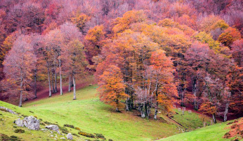 Forest Europe pide la adaptación urgente de los bosques al cambio climático