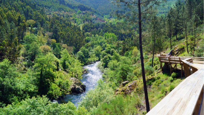 Portugal compensará la gestión forestal con ayudas de 80 a 150 euros por hectárea