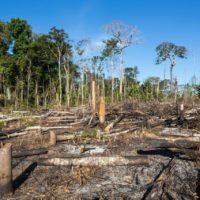 España golpea el tráfico ilegal de madera tropical