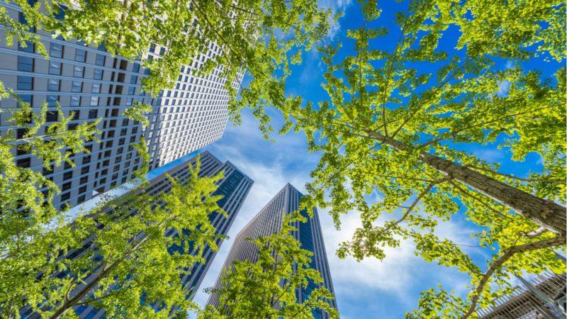 Capital natural: la empresa se moviliza para salvar la biodiversidad
