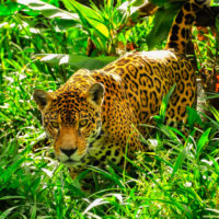La COP13 añade diez nuevas especies a las lista de animales migratorios protegidos