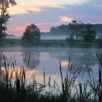 Una iniciativa global apuesta por el carbono azul de los humedales