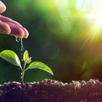 Más Política Agraria y más verde con menos presupuesto