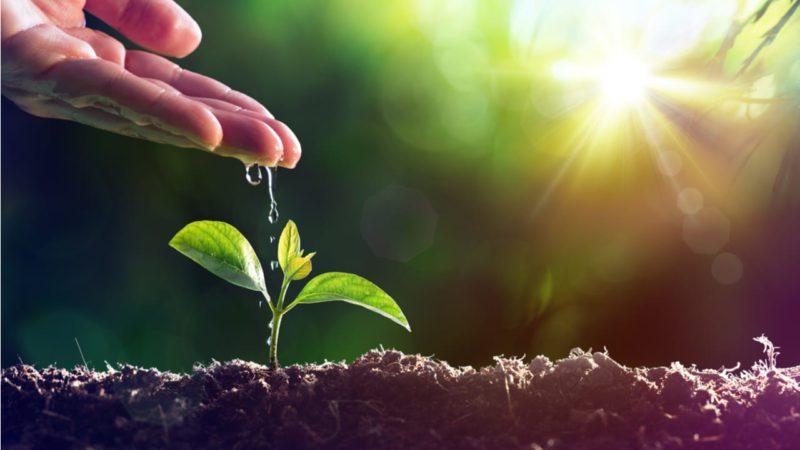 El suelo, clave para la supervivencia de la agricultura mediterránea